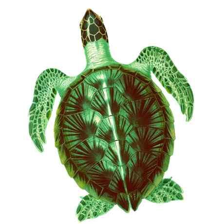 SeaTurtle - Coding for Kids